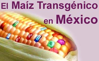 http://www.organicamente.com.ar/wp-content/uploads/2009/10/maiz_transge_titulo.jpg