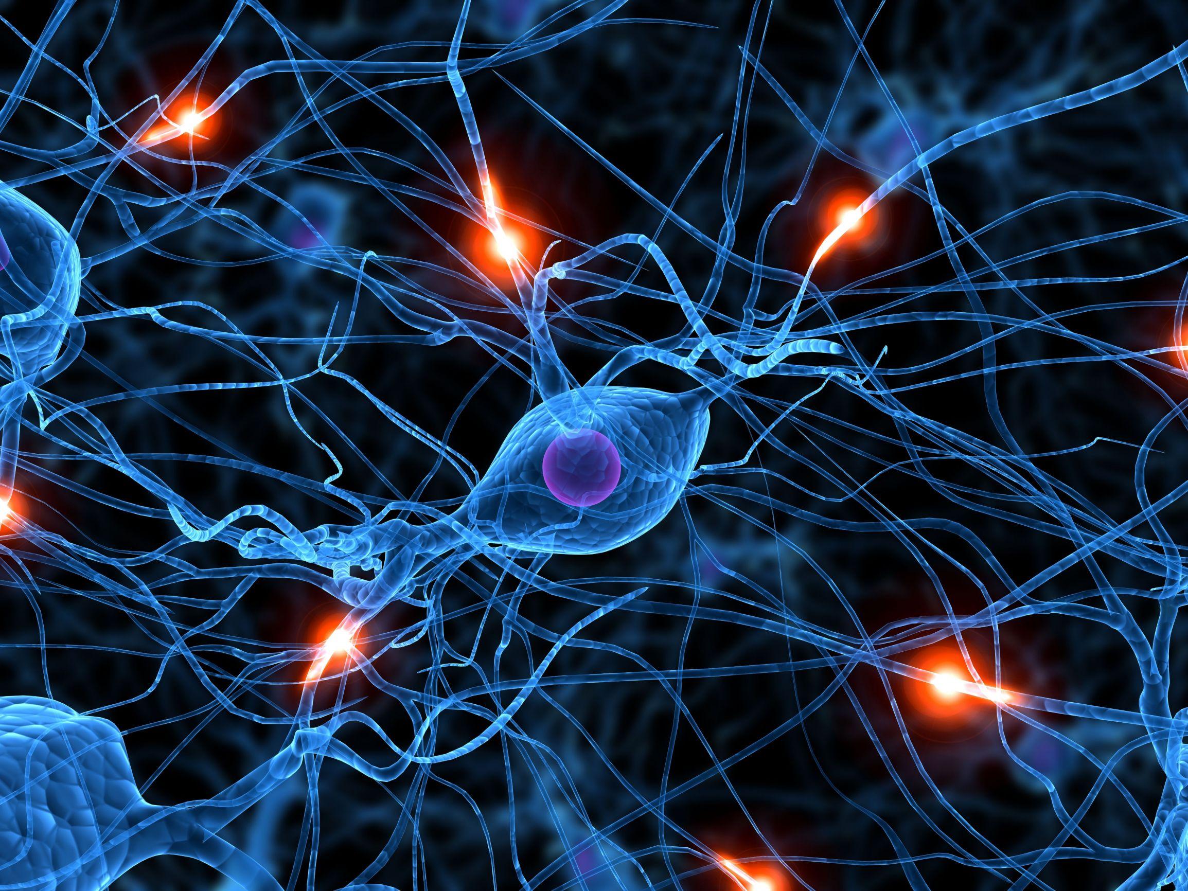 http://www.organicamente.com.ar/wp-content/uploads/2009/11/redneuronal1.jpg