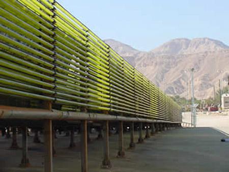 biofuel_alga