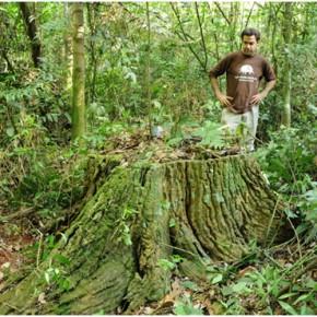 Nos unimos a Weleda para la preservación de la Selva Misionera!