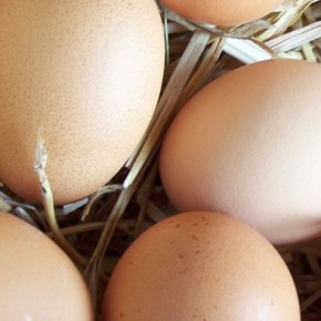 Galicia, huevos orgánicos