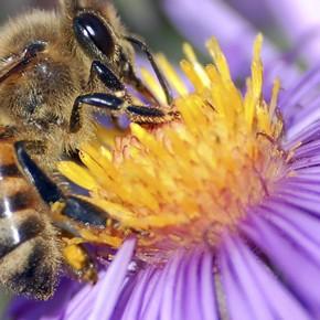 ¿El rol de las abejas es esencial en la vida de todo el planeta?