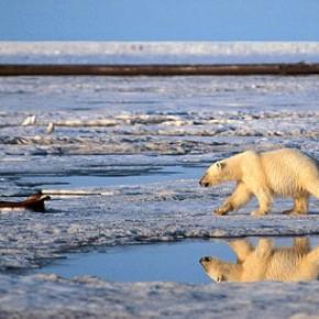 El Ártico es la víctima más evidente del cambio climático. ¿Por qué ésto nos afecta a todos?