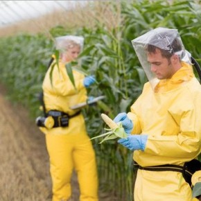 Organizaciones denuncian la influencia de la agroindustria sobre la FAO