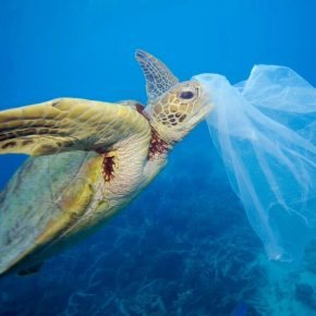 Bolsas Biodegradables: Productos 100% origen vegetal, no sólo en los alimentos