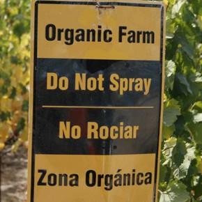 La ONU dice que las cosechas orgánicas a menor escala son la mejor forma de alimentar al mundo